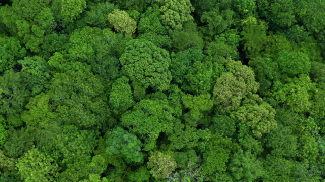 flying above lush foliage rainforest - tree canopy stock videos & royalty-free footage