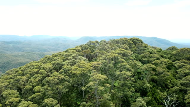 Flying above majestic jungle. Mountainous landscape