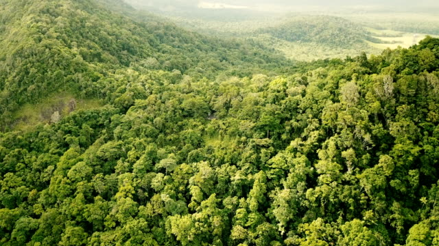 flying above majestic jungle. mountainous landscape - biodiversity stock videos & royalty-free footage