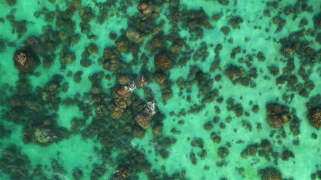 flying above of coral reef pattern with transparent ocean floor - great barrier reef stock videos & royalty-free footage