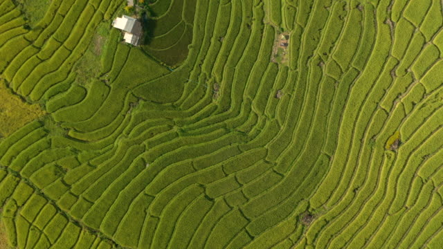 flying above rice terrace pattern - rice paddy stock videos & royalty-free footage