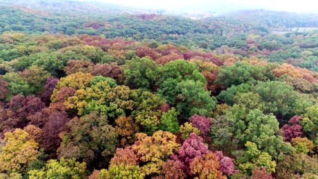 vídeos y material grabado en eventos de stock de volando por encima del bosque en otoño - orange nueva jersey