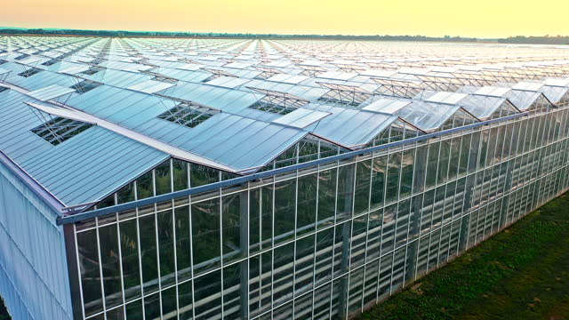 aerial flying above the large tomato greenhouse at sunset - aircraft point of view stock videos & royalty-free footage