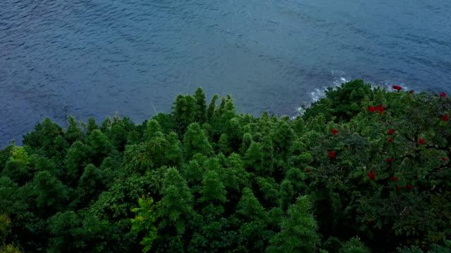 Flying Above Treetops Toward Bay of Water on Maui Island