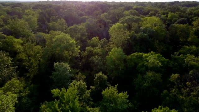 flying above woods - copertura di alberi video stock e b–roll