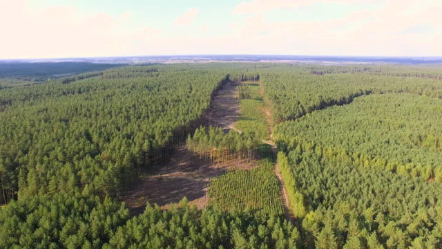 flying above young forest 4k aerial shot - enacting stock videos & royalty-free footage