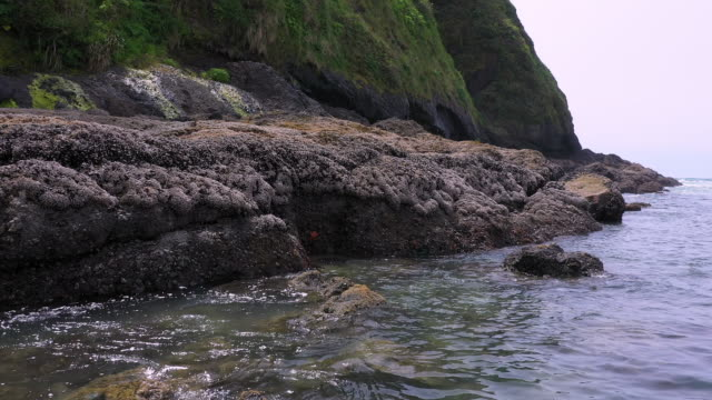 flying along rocky cost viewing starfish on the shore - heceta head stock videos & royalty-free footage