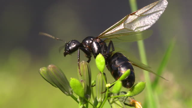 flying ant on top of a plant - animal wing stock videos & royalty-free footage