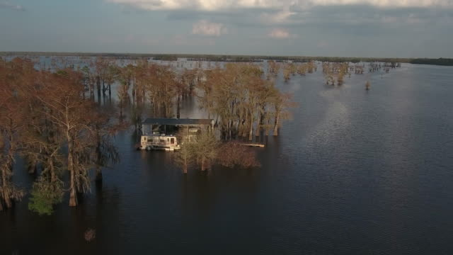 Flying around house in swamp - Drone Aerial 4K Everglades, Swamp bayou with wildlife alligator nesting Ibis, Anhinga, Cormorant, Snowy Egret, Spoonbill, Blue Heron, eagle, hawk, cypress tree 4K Nature/Wildlife/Weather