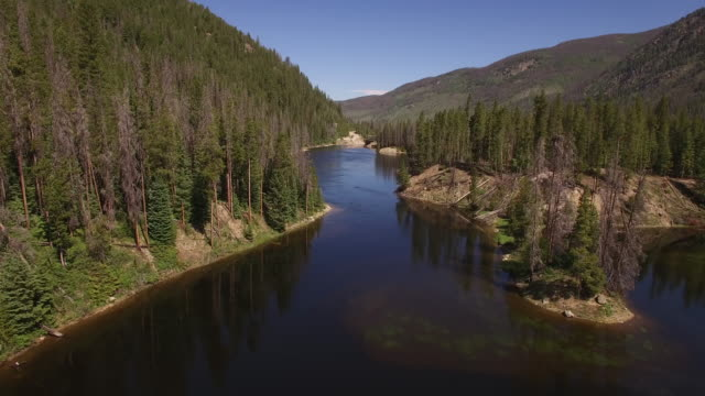 flying at medium hight down colorado river - drone aerial video 4k colorado rocky mountains, colorado river, mountain dam at lake granby, beautiful water reflection, spring, pristine water, foliage, wildlife aspen trees 4k nature/wildlife/weather - river colorado stock videos & royalty-free footage