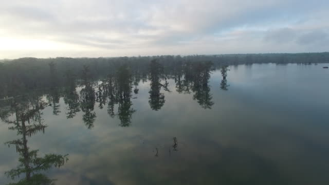 vidéos et rushes de flying at tree top hight in swamp bayou - drone aerial 4k everglades, swamp bayou with wildlife alligator nesting ibis, anhinga, cormorant, snowy egret, spoonbill, blue heron, eagle, hawk, cypress tree 4k transportation drone aerial video - marécage