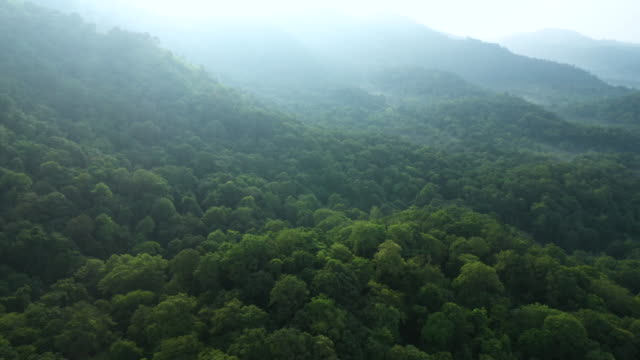flying back and tilt up of rainforest - treetop stock videos & royalty-free footage
