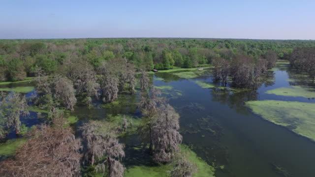 flying back to dock in swamp bayou- drone aerial 4k everglades, swamp bayou with wildlife alligator nesting ibis, anhinga, cormorant, snowy egret, spoonbill, blue heron, eagle, hawk, cypress tree 4k transportation - bayou lafourche stock-videos und b-roll-filmmaterial