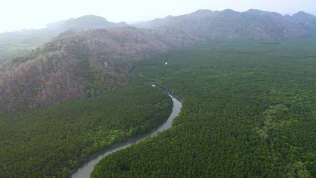 vídeos y material grabado en eventos de stock de volando hacia atrás de la selva tropical y muchos ríos - región del amazonas