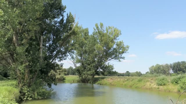 flying backwards from an elm tree through a river  -  aerial footage