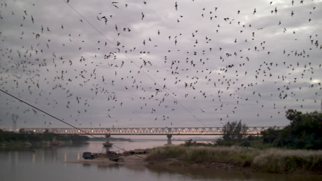 Flying Bats Over River Thanlyin in Slow Motion After Having Left Their Cave at Linno Cave in Hpa-An, Myanmar