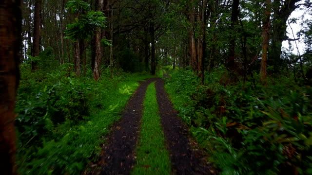 stockvideo's en b-roll-footage met vliegen tussen bomen over kleine weg in lush forest - enkelbaansweg