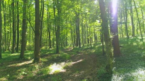 aerial flying between trees - woodland stock videos & royalty-free footage