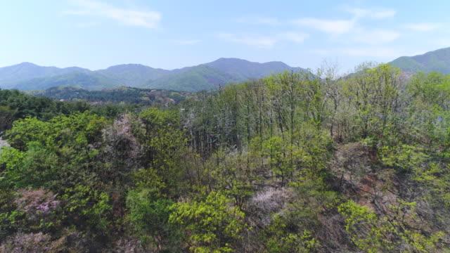 flying bird and island / gyeonggi-do, south korea - bird watching stock videos & royalty-free footage