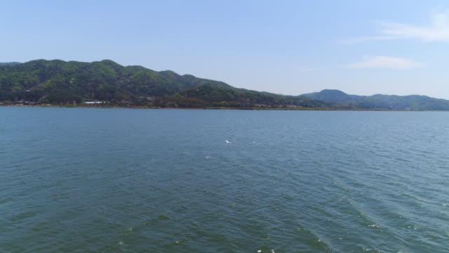 flying bird / gyeonggi-do, south korea - bird watching stock videos & royalty-free footage