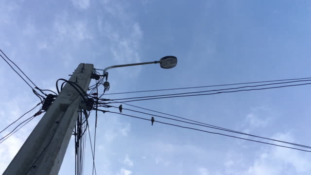 flying birds and sticking on outdoor wires. - telegraph pole stock videos and b-roll footage