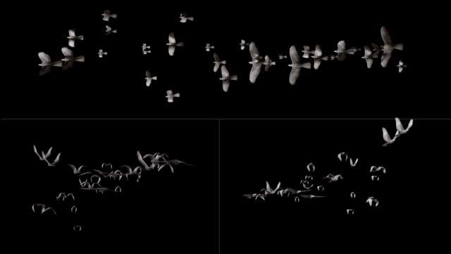 hd: flying birds - flock of birds stock videos & royalty-free footage