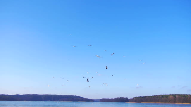 flying birds. - polder stock videos and b-roll footage