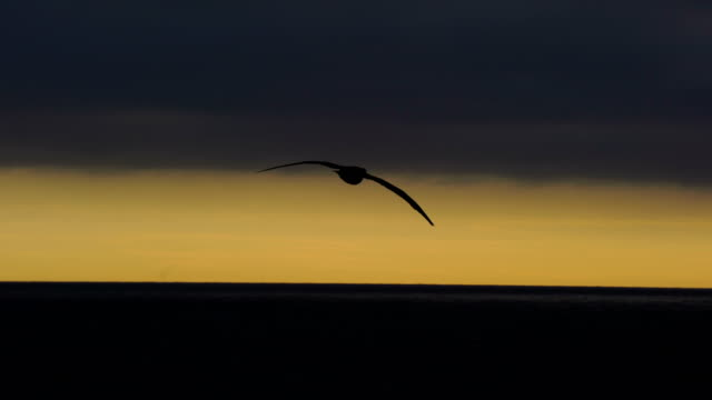 flying black browed albatross - drake passage stock videos and b-roll footage