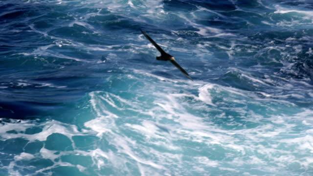 flying black browed albatross - albatross stock videos & royalty-free footage