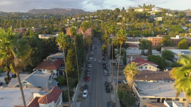 Flying by palm trees over a Los Angeles street