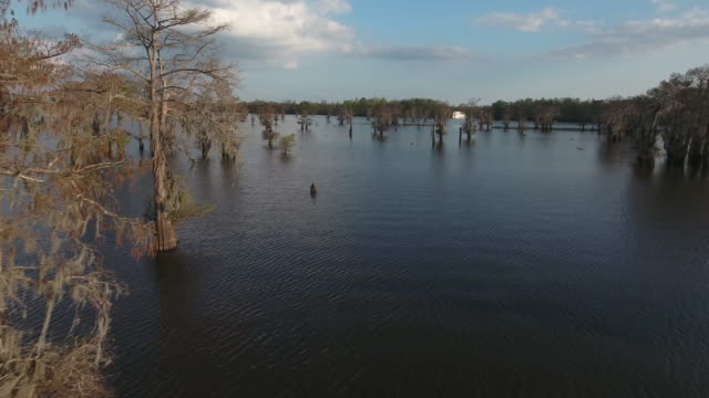 flying by tree med hight - drone aerial 4k everglades, swamp bayou with wildlife alligator nesting ibis, anhinga, cormorant, snowy egret, spoonbill, blue heron, eagle, hawk, cypress tree - drone aerial view - bayou lafourche stock-videos und b-roll-filmmaterial