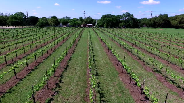 Flying center row forward looking at crops Aerial Shot over Wine to Market or Farm to Market in Austin Texas