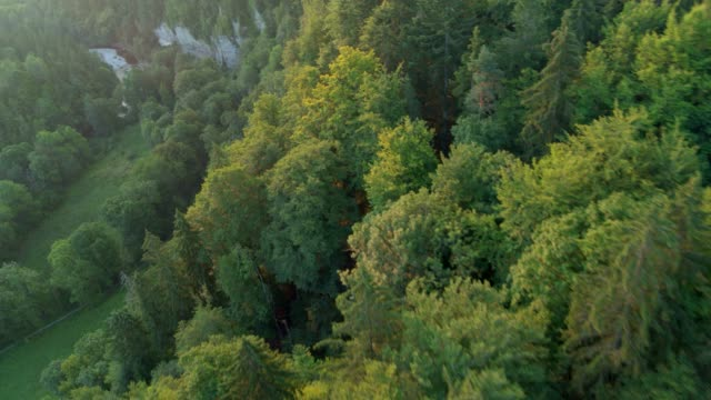 flying close over trees at sunrise - forest stock videos & royalty-free footage