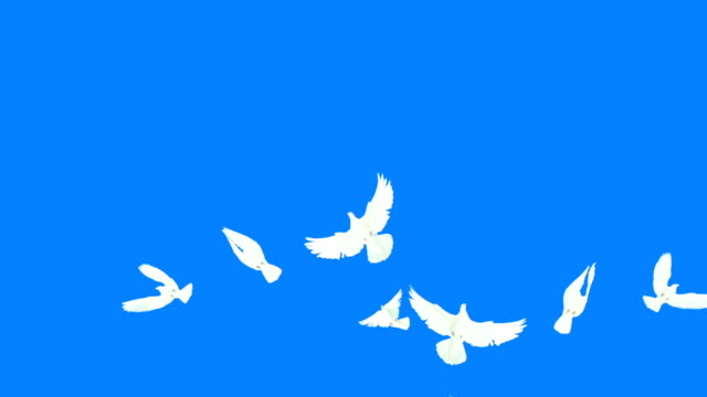 Flying Doves With Alpha Mask (Super Slow Motion)