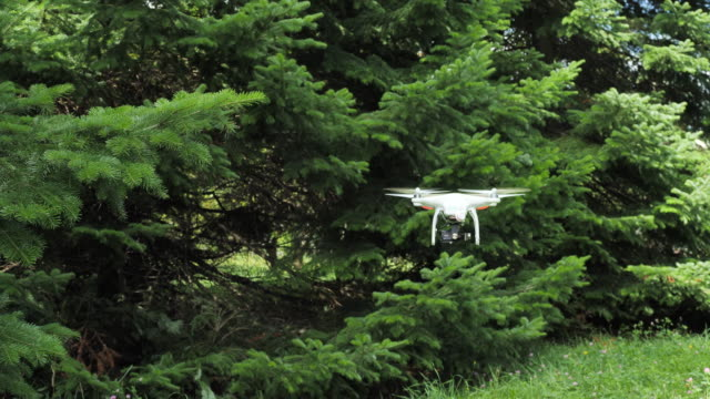 flying dron in the spruce forest. - 地衣類点の映像素材/bロール