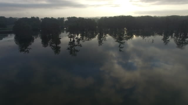 flying forward going to cypress trees- drone aerial 4k everglades, swamp bayou with wildlife alligator nesting ibis, anhinga, cormorant, snowy egret, spoonbill, blue heron, eagle, hawk, cypress tree 4k nature/wildlife/weather - bayou lafourche stock-videos und b-roll-filmmaterial