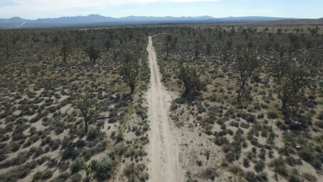 flying high over dirt road in joshua tree forest - drone aerial video 4k joshua tree national forest, desert barren land, no people with remote location cactus california desert, mojave desert, with extreme terrain 4k nature/wildlife/weather - joshua tree national park stock videos & royalty-free footage
