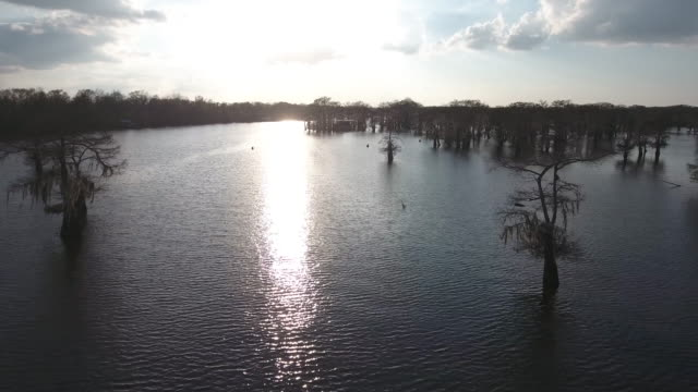 flying in swamp plain - drone aerial 4k everglades, swamp bayou with wildlife alligator nesting ibis, anhinga, cormorant, snowy egret, spoonbill, blue heron, eagle, hawk, cypress tree 4k nature/wildlife/weather drone aerial video - bayou lafourche stock-videos und b-roll-filmmaterial