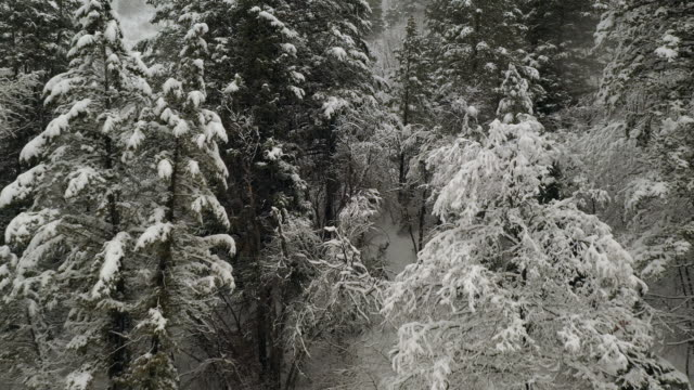 Flying into forest through trees as it snows