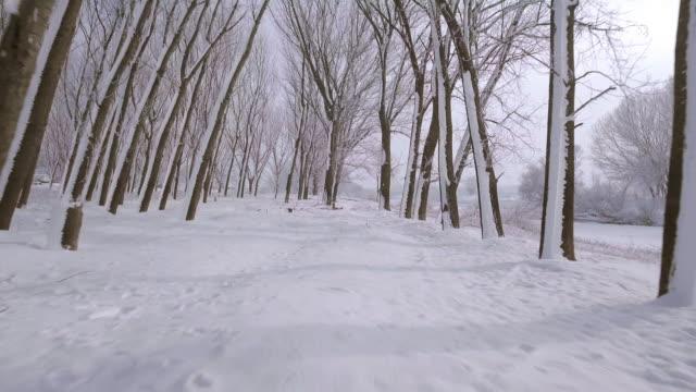 vídeos de stock, filmes e b-roll de voar em árvores nevadas - snow cornice