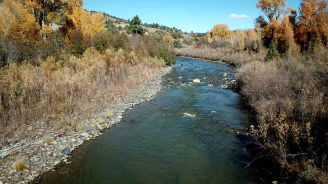 vídeos de stock e filmes b-roll de flying low above river and wild deer in wilderness - alto contraste