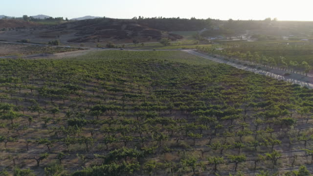 flying low over california vineyards - southern california stock videos & royalty-free footage