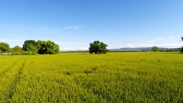フライング低緑の小麦