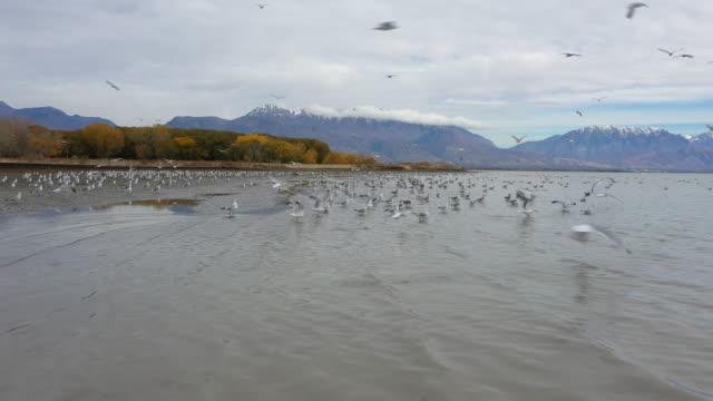 flying low over lake towards shoreline as birds fly away - リーハイ点の映像素材/bロール