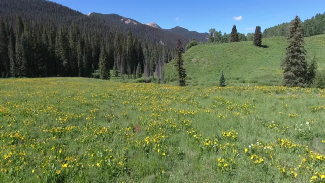 flying low over wild flowers, aerial, 4k, 30s, 2of10, crested butte, spire, hills, wild flowers, sun flower, reveal, stock video sale - drone discoveries llc drone aerial view - wildflower stock videos & royalty-free footage
