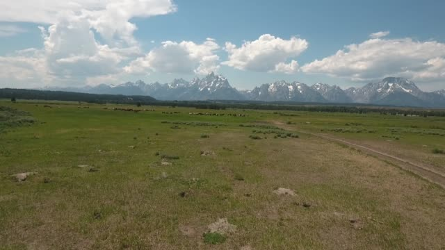 flying low to horses drone aerial 4k, alpine, american west, wild horses, fishing, grand tetons national park, jackson hole, mountains, nature, outdoors, rocky mountains, scenic, teton range, tetons, west, western,  wilderness, wildlife, wyoming.mov - wyoming ranch stock videos & royalty-free footage