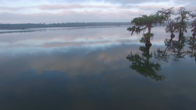 flying out to alligator with beautiful reflection - drone aerial 4k everglades, swamp bayou with wildlife alligator nesting ibis, anhinga, cormorant, snowy egret, spoonbill, blue heron, eagle, hawk, cypress tree 4k nature/wildlife/weather - bayou lafourche stock-videos und b-roll-filmmaterial