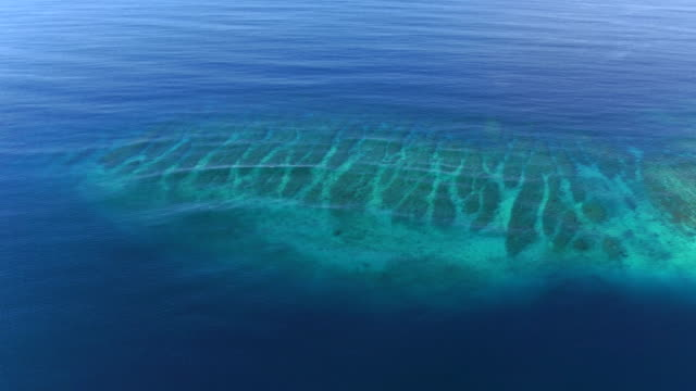 flying over a coral reef in south pacific - pacific ocean stock videos & royalty-free footage