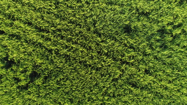 flying over a green lawn - sea grass plant video stock e b–roll