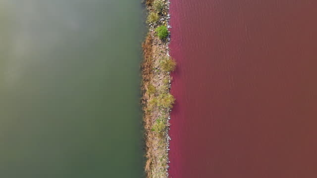 flying over a lake with red algae - seaweed stock videos & royalty-free footage